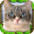 Game Stray Cat Simulator apk for kindle fire