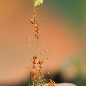 To Gather Around by Repindo Nasution - Animals Insects & Spiders ( macro )