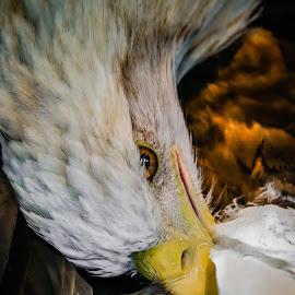 Not Kidding... by DB Channer - Animals Birds