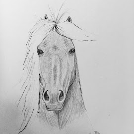 Icelandic Horse by Anika McFarland - Drawing All Drawing ( pony, horse head, icelandic horse, horse, portrait,  )
