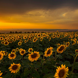 how many suns by Tihomir  Stoykov - Landscapes Sunsets & Sunrises ( clouds, field, sky, nature, sunset, lanscape, travel )