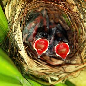 Hungry Birds by Alit  Apriyana - Animals Birds