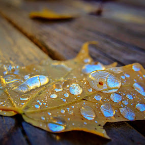 Water droplets on a leaf  by Susan Campbell - Nature Up Close Leaves & Grasses