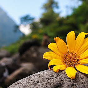 Flower in the rock by Ridwan Adhitama - Nature Up Close Flowers - 2011-2013