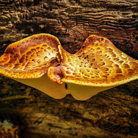 by Rufus Firefly - Nature Up Close Mushrooms & Fungi
