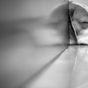 Zzzzzzzzzzzzz..... is what i'm good at by Reza Roedjito - Animals - Dogs Portraits (  )