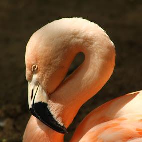 by Mallory Walsh-Ruggiero - Animals Birds
