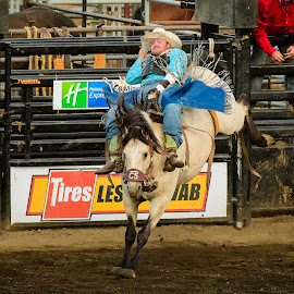 Hang On by Dennis McClintock - Sports & Fitness Rodeo/Bull Riding ( horseback, cowboy, bucking horse, horse, rodeo, rodeo 2017 )
