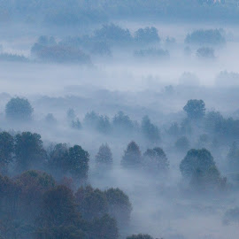 Trees in the morning mist by Pietro Ebner - Nature Up Close Trees & Bushes ( foggy, tree, fog, mist )