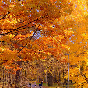 Colours of Autumn  by Vida Jankaitiene - City,  Street & Park  City Parks (  )