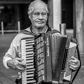 Accordion Admiration   by Dave Blox - People Musicians & Entertainers