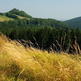 Our Czech countryside by Dagmar Germaničová - Landscapes Forests ( countryside, forest, landscape )