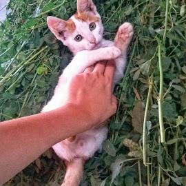 by Cristina Maria - Animals - Cats Kittens