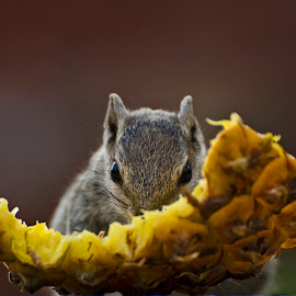 Its Breakfast time ! by Jagdish Singh - Animals Other Mammals ( food, squirrel,  )