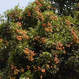 by ARIT KUMAR DAS - Food & Drink Fruits & Vegetables