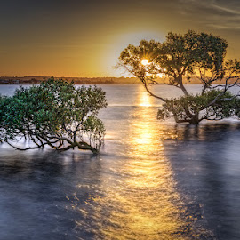 Sunset by Dom Del - Landscapes Sunsets & Sunrises ( water, tree, sunset )