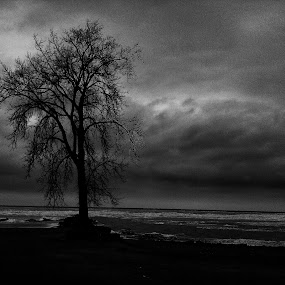 The dark one... by Christopher Gray - Instagram & Mobile iPhone ( winter, tree, ohio, bay village, beach, evening, huntington )