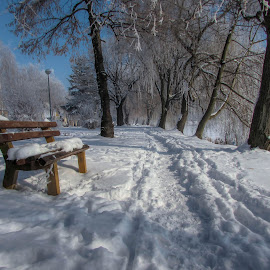 by Jasminka  Tomasevic - City,  Street & Park  City Parks
