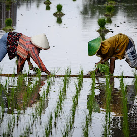 planting rice by Cito Zoza - People Maternity