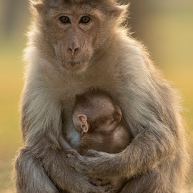Stay close..!! It's a terrific world out there by Praveen Premkumar - Animals Other Mammals ( love, mother, care, security, baby )