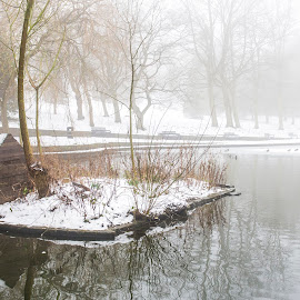 Bird House by Darrell Evans - City,  Street & Park  City Parks ( water, wood, park, hut, ducks, lake, birds, island, shed, wooden, winter, peel park, bradford, yorkshire, no people, snow, outdoor, trees, pond )