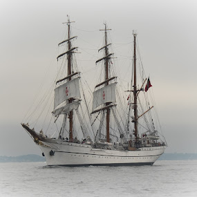 Tall Ship Sagres in Boston by Alan Cline - Transportation Boats ( boating, boston harbor, sailing, tall ships, ships, sagres )