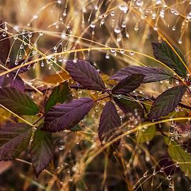 by Estislav Ploshtakov - Nature Up Close Natural Waterdrops