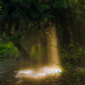 After the Storm #2 by Christopher Burnett - Landscapes Waterscapes ( shafts of light, forest, pwcsunbeams, river, mist )