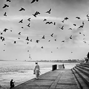 Free flight by Arup Acharjee - City,  Street & Park  Neighborhoods ( bird, monochrome, black and white, india, varanasi, river )