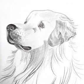 by Sandip Roy - Drawing All Drawing ( calm, sketch )