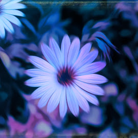 by Mark Wathen - Digital Art Abstract ( watercolor, purple, petals, floers )