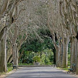 by Kishu Sing - City,  Street & Park  City Parks