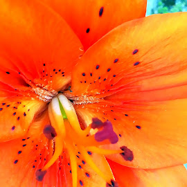 Flower by Gil Reis - Instagram & Mobile Android ( macro, flowers, nature, androide, mobilesphoto, colors )