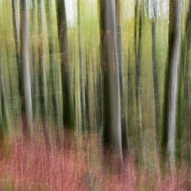 Forest in autumn colors by Mikaela Friberg - Landscapes Forests ( calm, dreamy, green, environement, awareness, forest, relaxing, soft, free, nature, autumn, feeling, artistic, trees, mind, renewal, forests, natural, scenic, meditation, the mood factory, mood, emotions, jade, revive, inspirational, earthly )