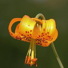 by Debbie Slocum Lockwood - Flowers Single Flower (  )
