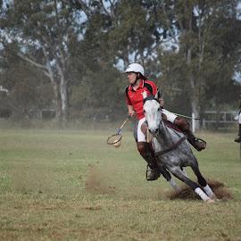 Polocrosse by Ester Ayerdi - Sports & Fitness Other Sports ( polocrosse, horse sport, sports, sport, australian sport )