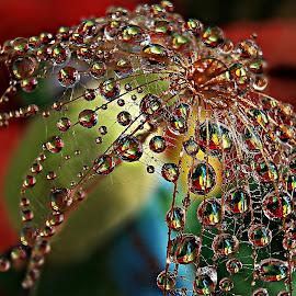 Secret Under Droplets Bell by Marija Jilek - Nature Up Close Natural Waterdrops