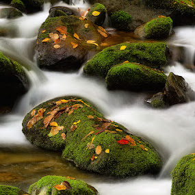 Fall Stream  by Ernie Page - Landscapes Waterscapes ( great smoky mountian national park, roaring fork motor trail, stream, fall, national parks, streams )