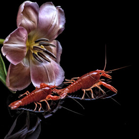 Tulip and shrimps by Basuki Mangkusudharma - Nature Up Close Other Natural Objects ( shrimps, tulip )