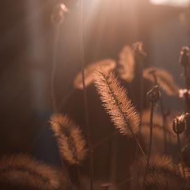 Allways the sun by Dragan Dvorski - Novices Only Macro ( lights, macro, nature, color, macro photography, shadow, plants, nature up close, springtime, sun, flower )