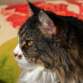 by Dee Haun - Animals - Cats Portraits ( single eye, cats, 180216f0296ce2, animals, side view, portraits,  )