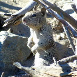 PUT  EM UP by Cynthia Dodd - Novices Only Wildlife ( animals, nature, wildlife, cute, log, squirrel )