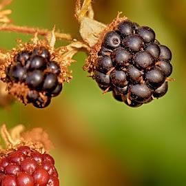 Berries by Radu Eftimie - Nature Up Close Gardens & Produce
