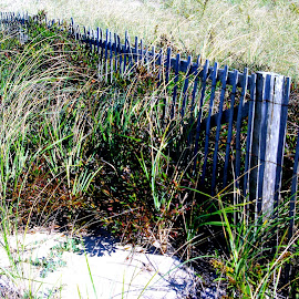 Dune Fence by Martin Stepalavich - Nature Up Close Sand