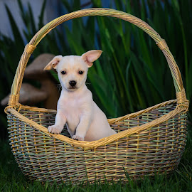 Reyna by Rick W - Animals - Dogs Puppies