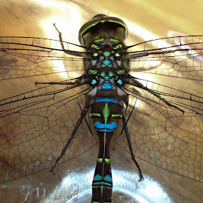 Dragonfly Mosaic by Alan Cline - Animals Insects & Spiders ( body, detail, color, wings, dragonfly )
