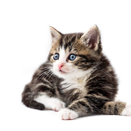 I am so sweet. by Susan Pretorius - Animals - Cats Kittens