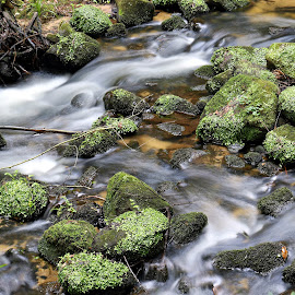 Green stones by Gil Reis - Nature Up Close Rock & Stone ( water, forests, macro, life, bio, nature, stones )