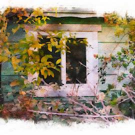 The Window by Leslie Hunziker - Buildings & Architecture Homes ( window, plants, neighborhood, buildings, house )