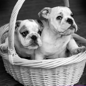 Zeus' Pups.jpg